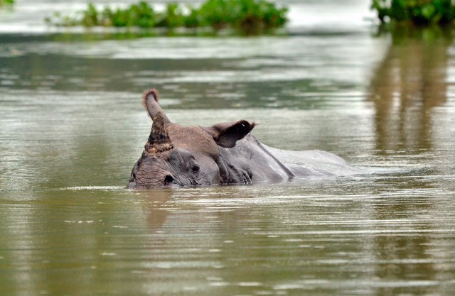 The Forgotten Victims Of Natural Disasters Our Wildlife