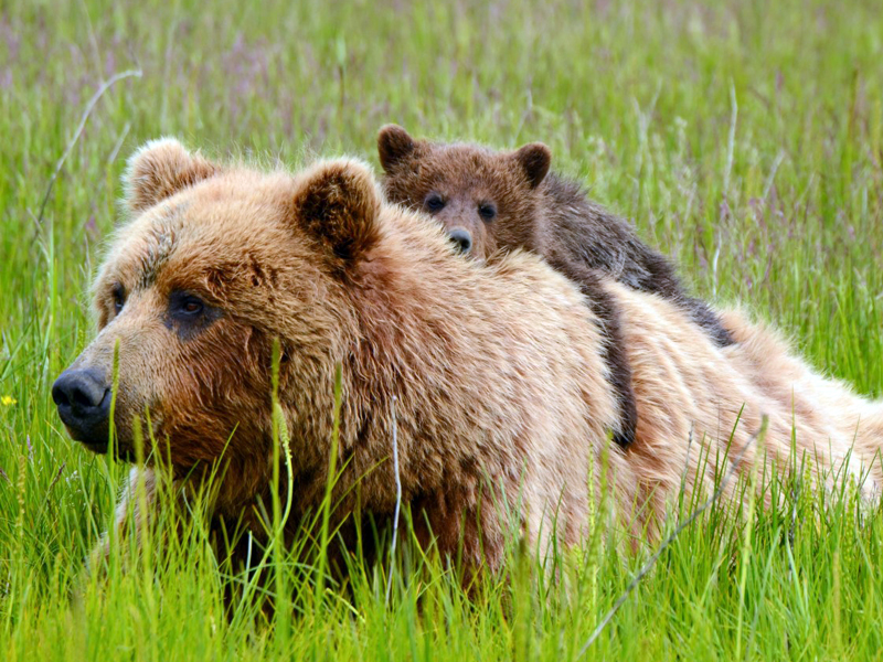 Heartbreaking news the tragic resolution passed to for Did congress approve killing hibernating bears