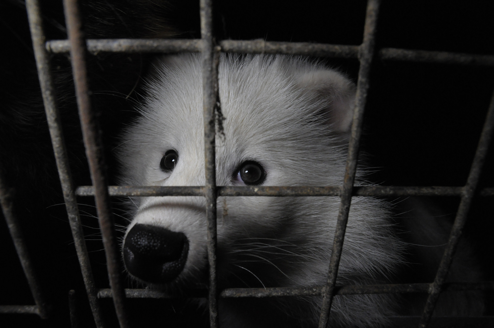 should we kill animals for fur These short articles give information about the animals we use for clothing and covers fur, leather, suede, exotic skins like snake, wool, and sheepskin, animals used for clothing.