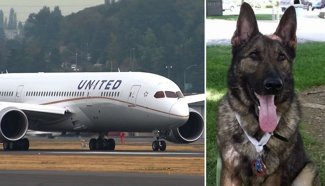 All airlines are not united when it comes to pets maybe for Best airline to fly dogs