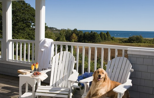 Top 10 Pet Friendly Hotels World Animal News