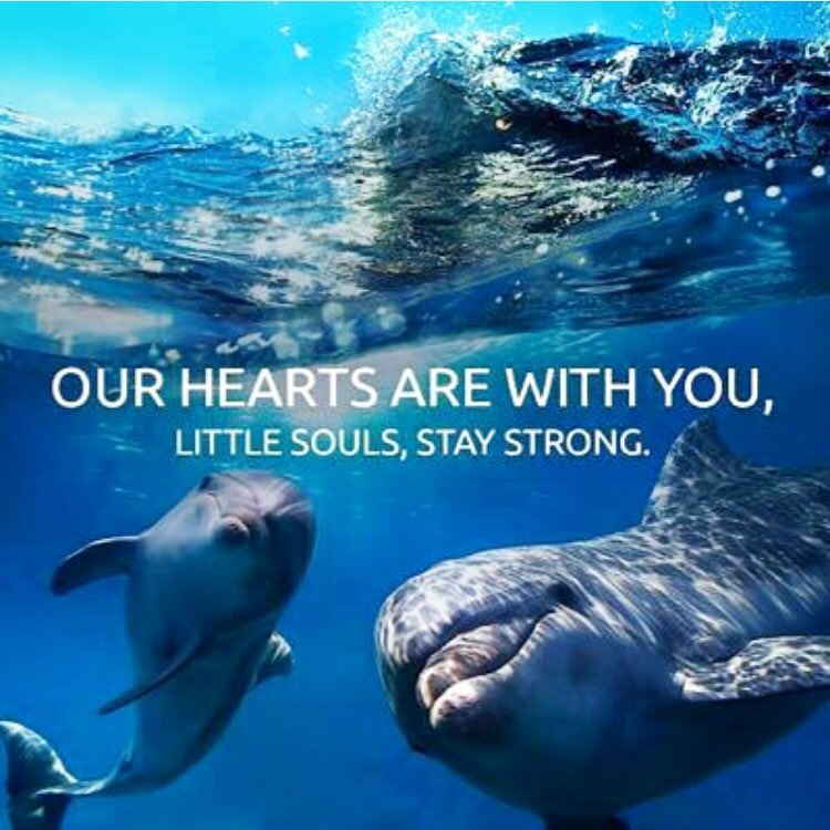Another Blue Cove Day For The Dolphins In Taiji An