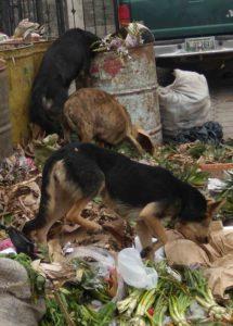 Dogs Guatemala