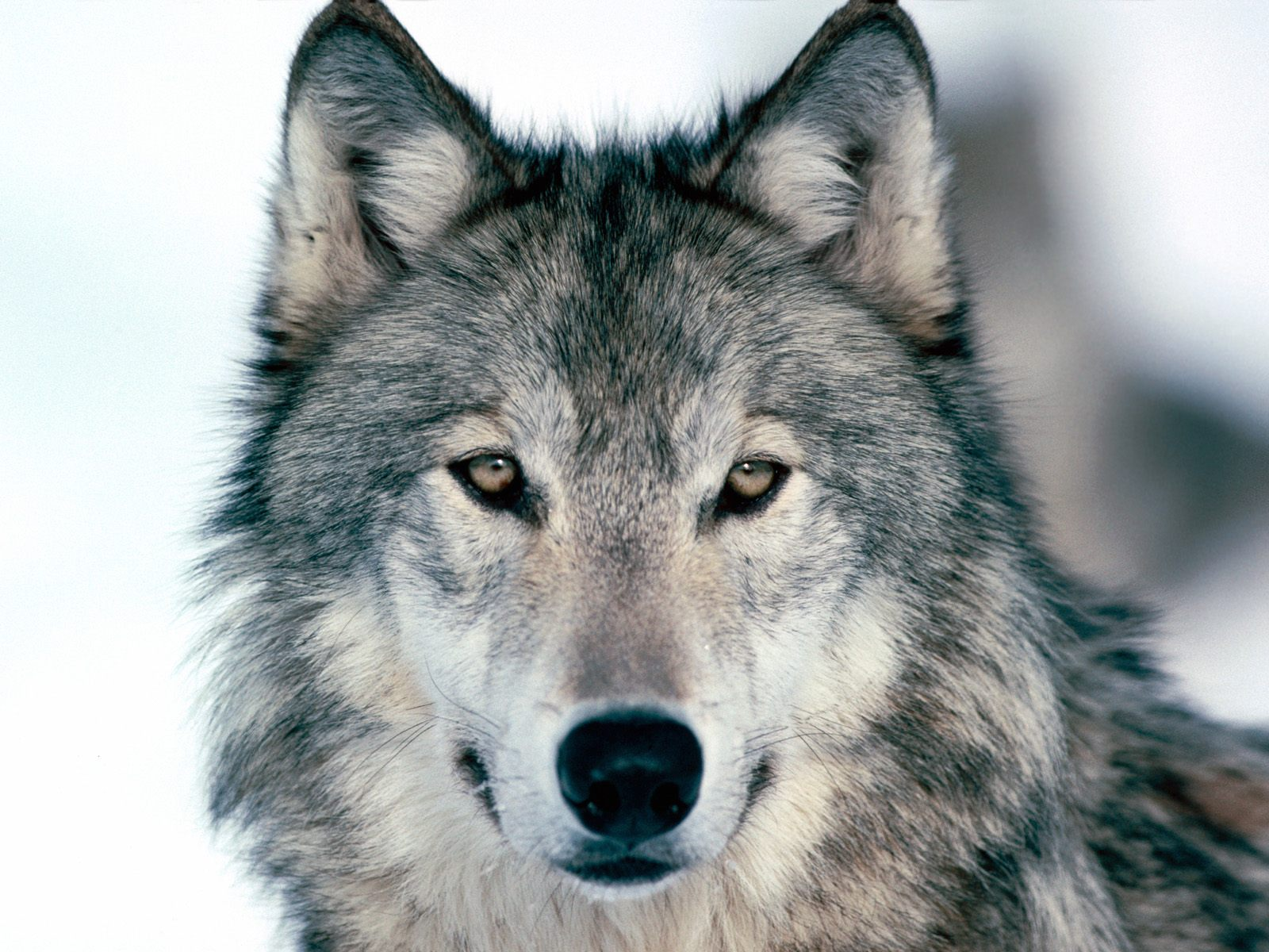 A Hike Of A Lifetime With Rescued Wolves At Wolf Heart ...