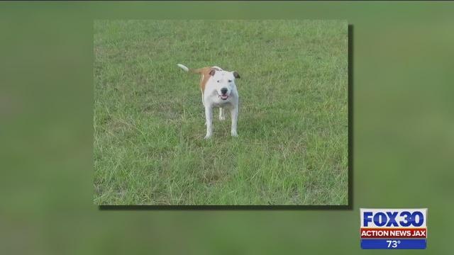 Nassau_County_deputy_shot_family___s_dog_0_8209523_ver1_0 ...