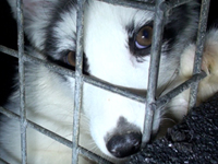 Aleska Is Spared She Will Breed Next Years Fo Her Babies Will Be Taken Away From Her And Killed Like Her Brothers Watch