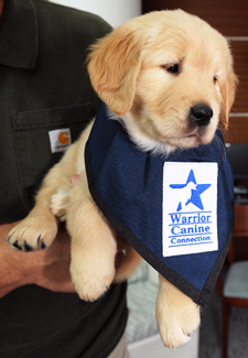 Why Was Warrior Canine Connection For Veterans Service Dogs