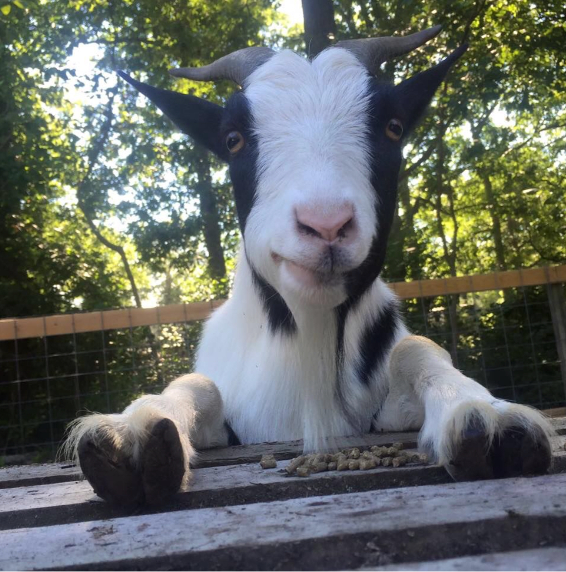 New Jersey's Freedom Farm Animal Rescue Secures A New ...