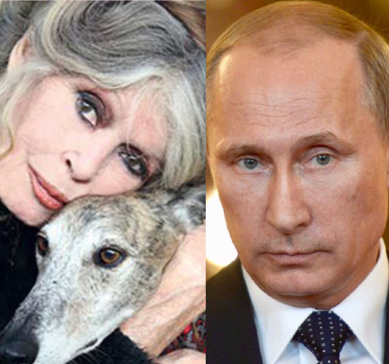 Brigitte Bardot Warns Vladimir Putin About The Culling Of Stray Dogs Before Russia Hosts The World Cup World Animal News