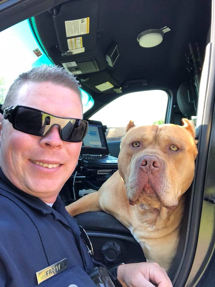 """Dog Reported To Be """"Vicious"""" Rescued By Texas Police"""