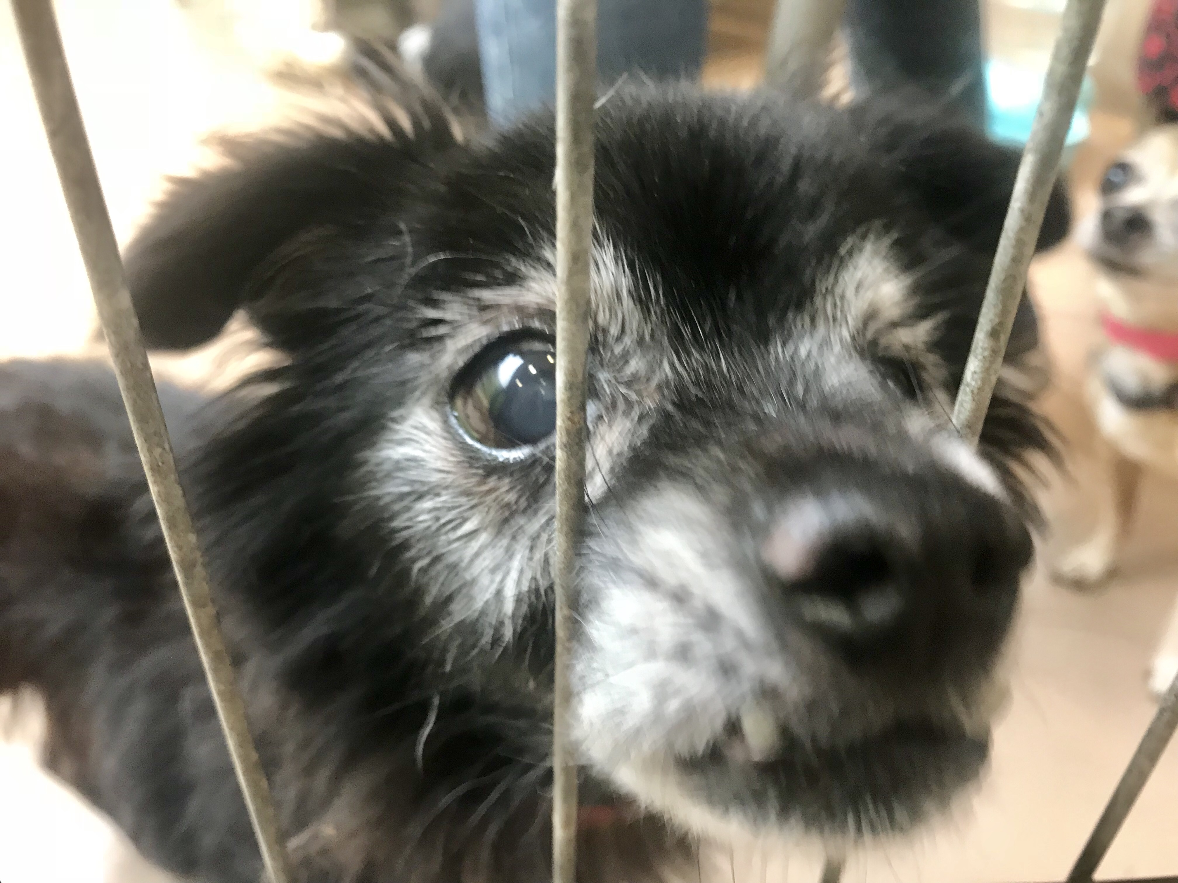urgent wan update all 6 los angeles city animal shelters are