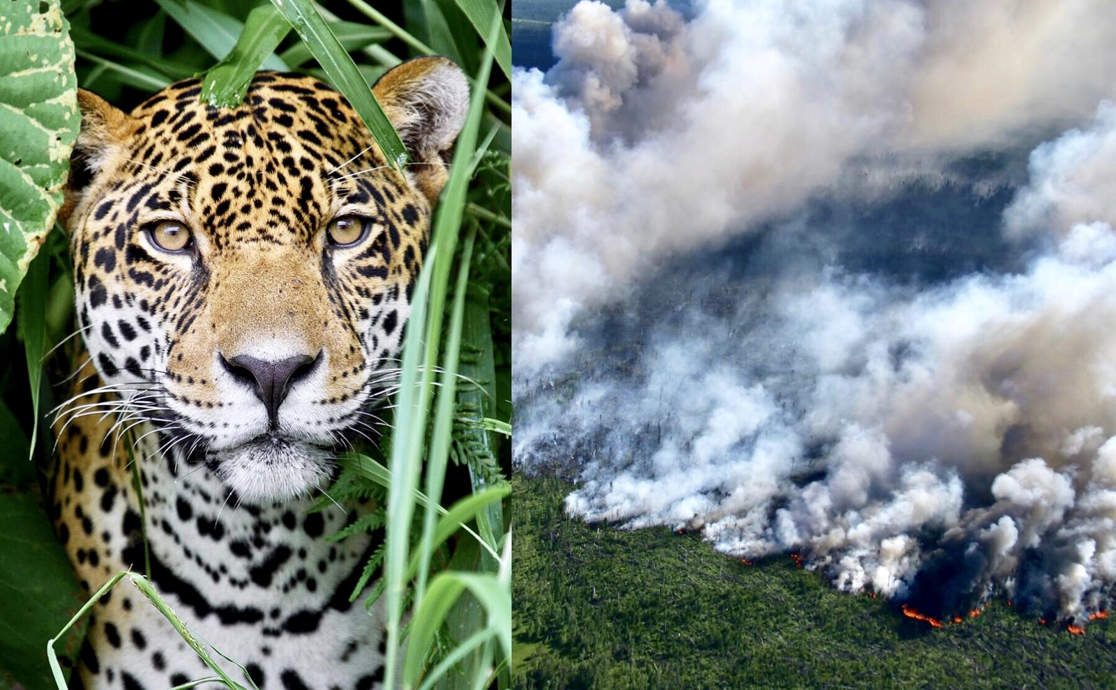Urgent The Amazon Rainforest Has Been Burning For 3 Weeks