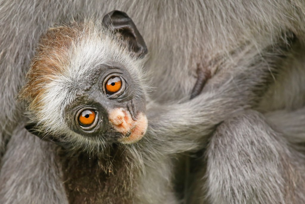 Endangered Species List 2020.Breaking New Report On The World S 25 Most Endangered
