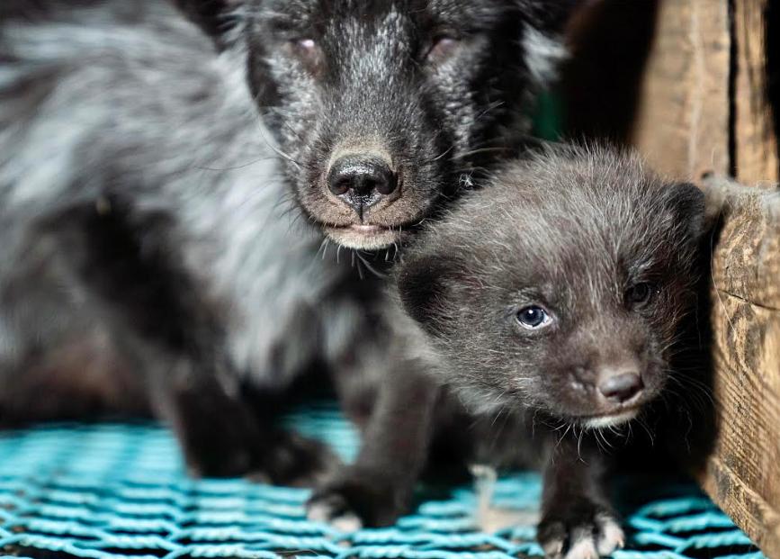 Photo by Humane Society International