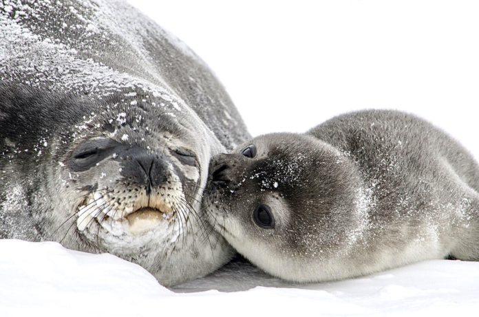 Petition: Ask Norway To End This Year's Barbaric Seal Hunt With A Quota Of 18,548 Harp Seals