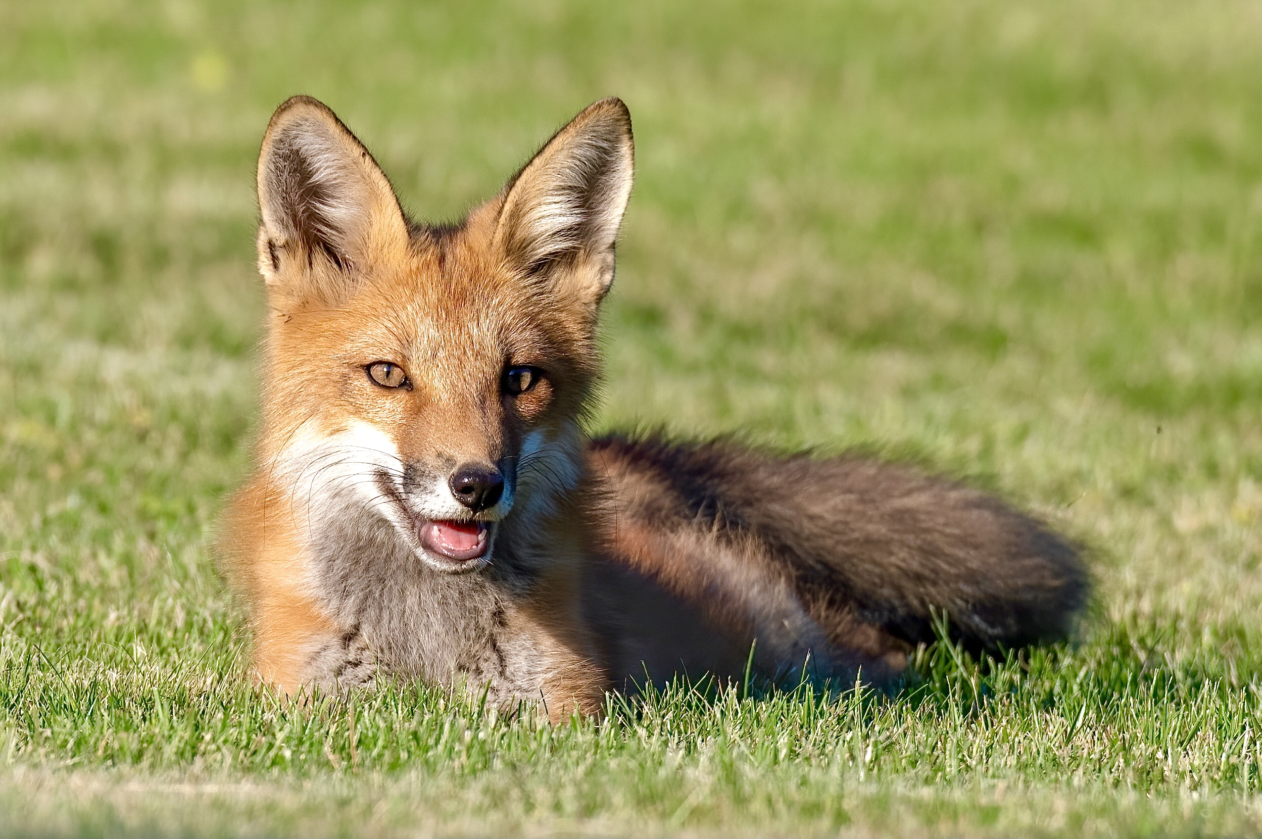 Victory! Israel Becomes The First Country In The World To Ban The Sale Of Fur - World Animal News